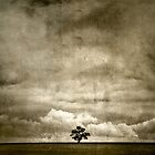 Lone Tree by Paul Pichugin