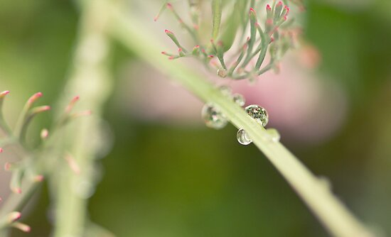 The World In A Drop by Josie Eldred