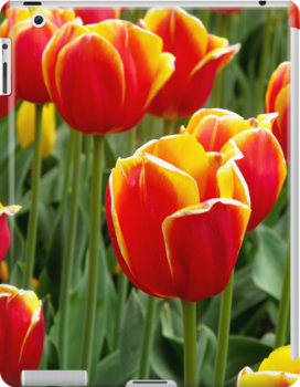 Red Yellow Tulips iPad cover by Gayle Shaw