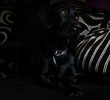 Black Labrador  by cmcqphotography