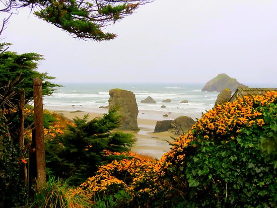 View Through The Scot's Broom..Bandon, Oregon by trueblvr