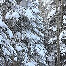 Canadian Forest - Winter Snowfall by Jim Sauchyn