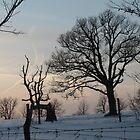 Ancient Oaks in Winter by Liesl Gaesser
