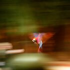 Parrot In Flight by ajwalters