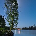 River Murray Christmas Tree 2012 by pablosvista2