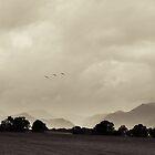 Lakeland by Dan Milton