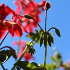 Pelargonium by vitez-art