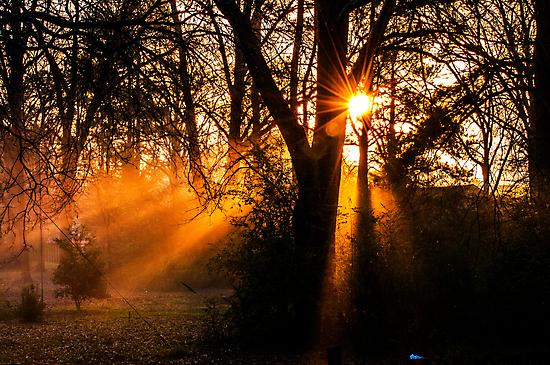 December Morning by Thomas Eggert