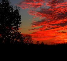 An Aussie Christmas Sunrise by Larry Lingard/Davis
