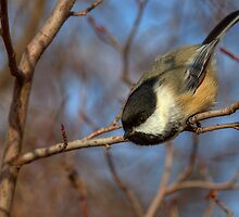 Chickadee Launch by JamesA1