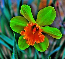 Daffodil by EBArt