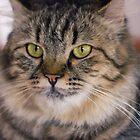 Cat by Gunardi Nurkamal
