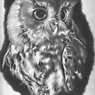 Owl 2 by Karen Townsend
