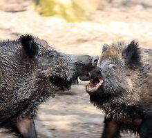 fighting wild boars by derausdo