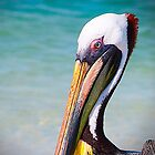 Pelican by Michael Jenkins
