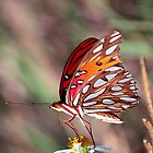 Butterfly by thynquer