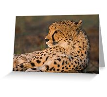 Rest And Watch Greeting Card