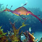 Weedy Seadragon by peterperry