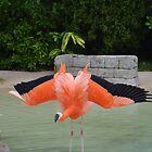 Flamingo Showing Off Wings by Sean Paulson