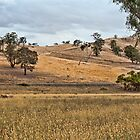Peaceful Country Scene, near Mansfield, Victoria by Vickie Burt