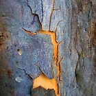 Bark Abstract # 13 by Frederick James Norman