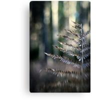 Winter Fern Canvas Print