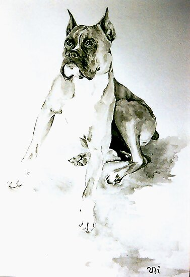 Boxer by globeboater