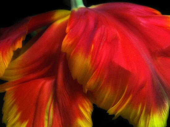 Parrot Petals by Jessica Jenney