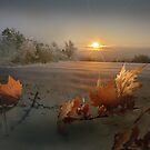 Winter Sun by Igor Zenin