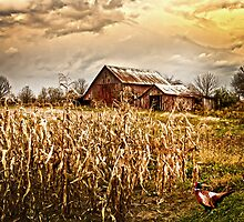 PHEASANTS HEADING FOR CORN PATCH by Randy & Kay Branham
