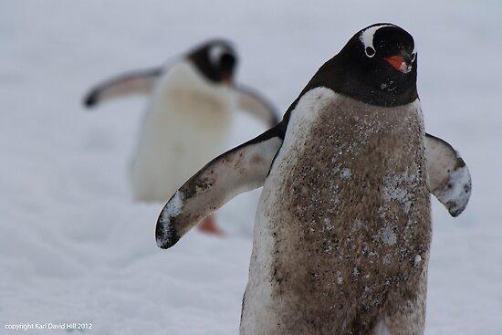 Penguin 005 by Karl David Hill