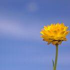 Flora by kurrawinya
