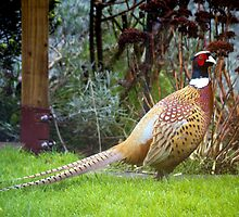 The Lucky Pheasant by mikebov