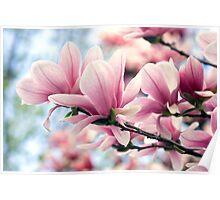 Heavenly Magnolias Poster