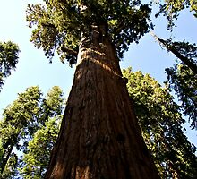 General Sherman Trunk to Treetop by Michael Kirsh