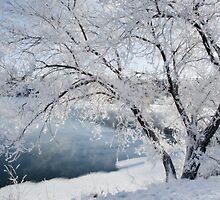 Saskatoon, Sk. Canada by Halobrianna