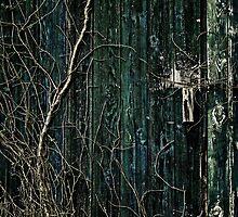Creeper by Andrew Paranavitana