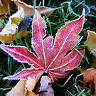 First Frost by Ticker