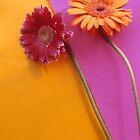 Gerbera Flowers Series by Tamarra