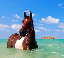 horse in the Mediterranean Sea by PhotoStock-Isra