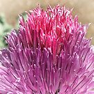Chives flower by Elaine Game