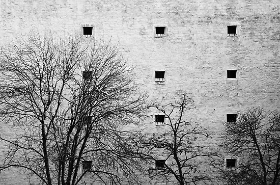 Windows by Anne Staub