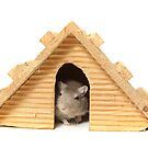 Successful mouse living in a wooden house by PhotoStock-Isra