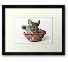 Chincilla in a straw basket  Framed Print