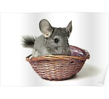 Chincilla in a straw basket  Poster