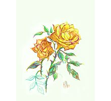 Golden Yellow Miniature Rose  Photographic Print