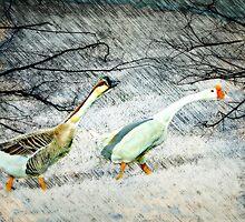 Snowbound by Scott Mitchell