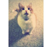 Pink Nose Photographic Print