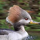 Female hooded merganser profile by jozi1