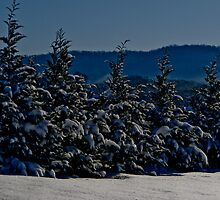 Snowy Trees by AbeCPhotography
